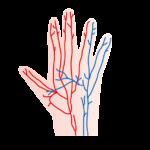 血流の改善をして、手足の指先の冷え性にも打ち勝ちましょう。ひざサポーター ふくらはぎサポーター くつした かかと はらまき 保温 腰痛 腰痛ベルト 腰痛予防 健康サポーター 骨盤ベルト 初期妊娠 超初期妊娠 冷え性 冷え症