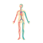 血流の改善すると腰への負担も減り、腰痛予防にも繋がります。ひざサポーター ふくらはぎサポーター くつした かかと はらまき 保温 腰痛 腰痛ベルト 腰痛予防 健康サポーター 骨盤ベルト 初期妊娠 超初期妊娠 冷え性 冷え症